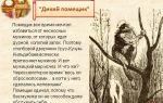 """Краткое содержание сказки """"дикий помещик"""" салтыкова-щедрина: краткий пересказ сюжета"""