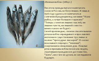 """Анализ сказки """"вяленая вобла"""" салтыкова-щедрина: идея, тема, суть и смысл"""